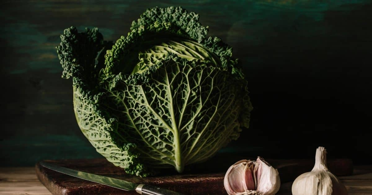 Learn how to freeze cabbage (Blanching or with out blanching)