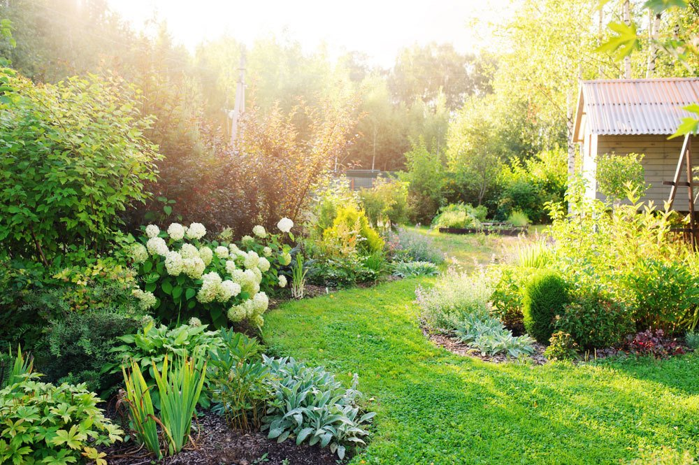 Some Methods You Can Make Your Backyard Really feel Extra Personal