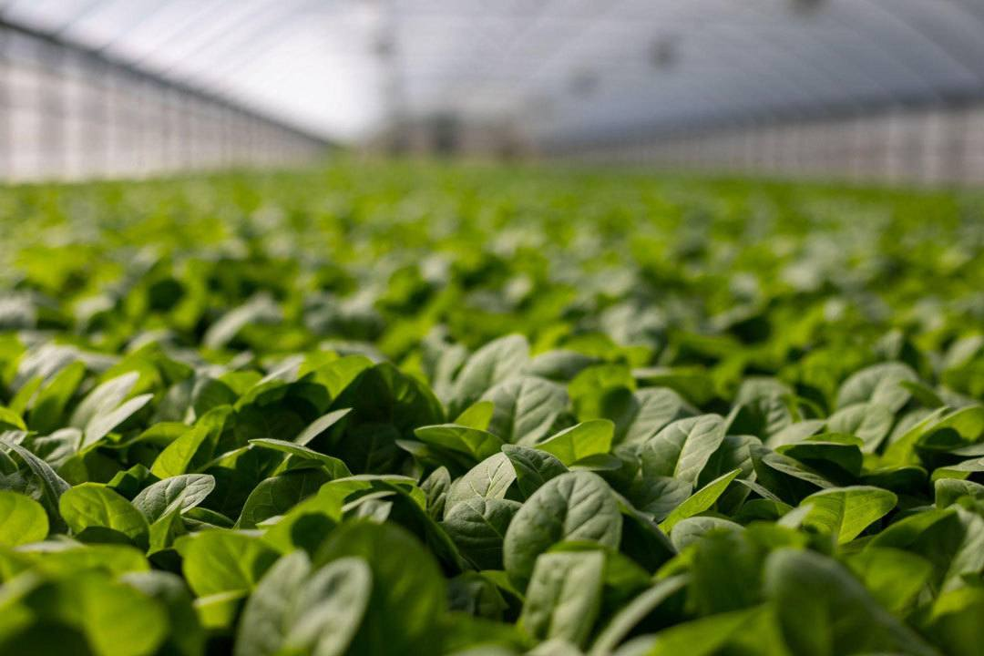 Challenges of Proudly owning a Greenhouse and How you can Have interaction the Journey